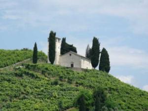 prosecco-vigne-col-san-martino-by-mesfet-wikipedia-jpg