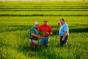 Il riso Clearfield tira il fiato, negli Usa arriva Provisia