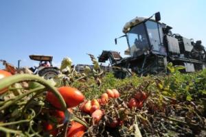 raccolta-meccanizzata-del-pomodoro-da-industria14nov2018anicav