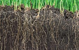 Linea Geosan, biofortificante della rizosfera - Fertilgest News