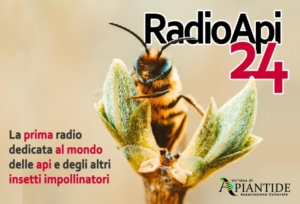 radio-api24-logo-by-api24it-jpg