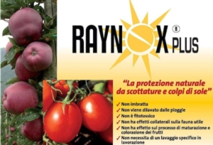 raynox-plus-fonte-xeda