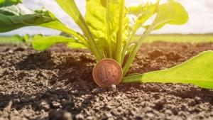 reddito-agricolo-euro-bietola-by-bits-and-splits-adobe-stock-750x422