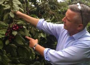 Ciliegie Val Venosta, l'annata è positiva - Plantgest news sulle varietà di piante
