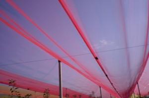 reti-fotoselettive-fonte-fondazione-navarra-evento-20170126