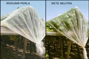 reti-iridium-perla2