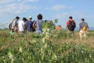 ricerca-divulgazione-prove-campo-by-gruppo-agroecologia-santanna-pisa-jpg