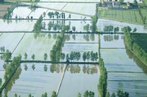 Concimazione e redditività della risaia con i fertilizzanti Unimer - Unimer - Fertilgest News