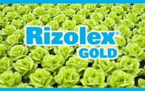 rizolex-gold-sumitomo.jpg