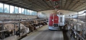 robot-vector-lely-mentre-distribuisce-cibo-in-stalla-gen-2019-allevatori-top