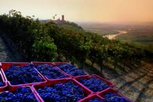 roero-monferrato-siti-750x500