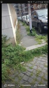 roma-erbe-infestanti-2-autore-romafaschifo.jpg