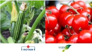 Boro, zinco e 17 amminoacidi per fioriture migliori - colture - Fertilgest