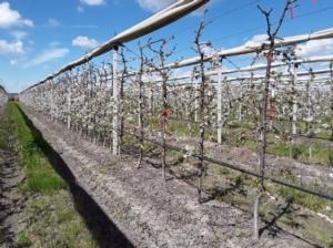 """International Cherry Symposium: un assaggio del terzo """"tour del ciliegio"""" - Plantgest news sulle varietà di piante"""