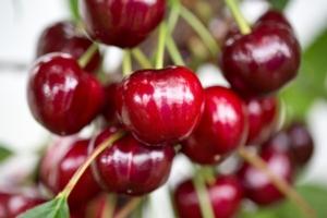 L'anno che verrà: il 2021 per Salvi Vivai - Plantgest news sulle varietà di piante