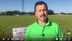Un leader fra i cereali - Scam - Fertilgest News