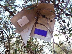 scam-trappola-magnet-oli-attract-kill