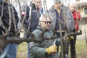 scuola-di-potatura-preparatori-uva