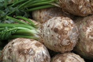 Sedano rapa, riscoperta della tradizione - Plantgest news sulle varietà di piante