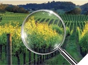 Selectrum<sup>&trade;</sup>, liberati dalle malerbe per un raccolto di qualit&agrave;