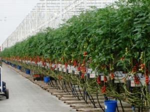 Le tecniche applicate alle serre e alle colture protette - 1° parte - Plantgest news sulle varietà di piante