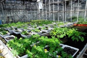 serra-piante-fonte-agroinnova