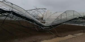 serra-piegata-e-sfondata-dalla-pioggia-27-set-2020-confagricoltura-salerno