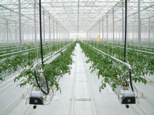 Le tecniche applicate alle serre e alle colture protette - 2° parte - Plantgest news sulle varietà di piante