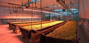 Serre smart, nuova luce per le colture protette - Plantgest news sulle varietà di piante