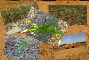 siccita-colture-carenza-idrica-by-matteo-giusti-agronotizie-jpg