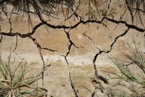 Siccità, il Sud conta i danni