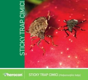 sipcam-cimice-asiatica-sticky-trap.jpg