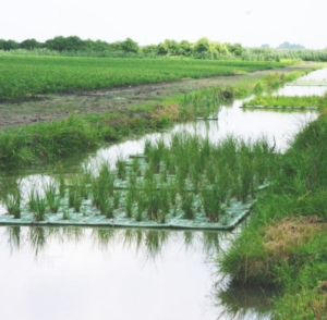 sistema-di-fitodepurazione-sperimentato-da-veneto-agricoltura-primo-art-set-2018-rosato-fonte-mario-rosato