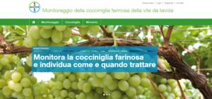 Cocciniglia farinosa, online il nuovo sito per il monitoraggio