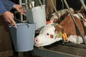 sloten-acqua-vitelli