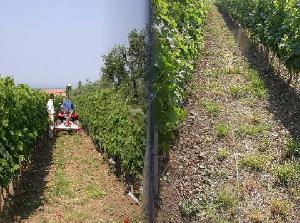 soing-arp-viticoltura-2-foto
