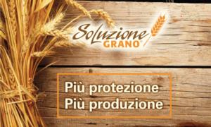 SoluzioneGrano: la proposta di Sumitomo per la difesa completa dei cereali