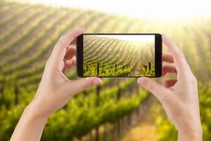 soluzioni-digitali-vigna-vigneto-viticoltura-tecnologie-smartphone-andy-dean-fotolia-750