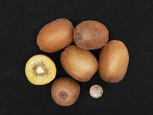 soreli-kiwi-polpa-gialla