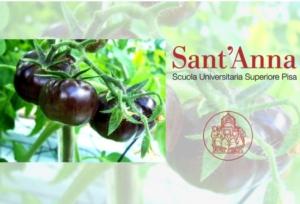 Sant'Anna, il gene del pomodoro nero - Plantgest news sulle varietà di piante