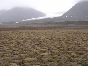 suoli-glaciali-sara-borin