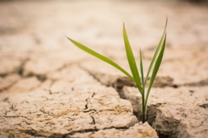 suolo-consumo-terreno-terra-by-sawitreelyaon-adobe-stock-750x5001