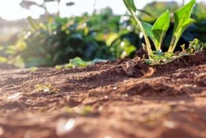 Adriatica, le soluzioni che aiutano e proteggono il suolo - Fertilgest News