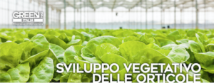 Orticole, per un corretto sviluppo vegetativo ci pensa Green Has Italia - Green Has Italia - Fertilgest News