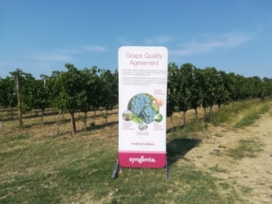 syngenta-grape-field-tour-oltrepo-pavese-2019.jpg