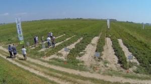 syngenta-sinergie-orticoltura-volo-drone-pomodoro-da-industria-lagosanto-26-7-2013