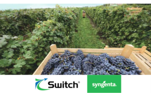 syngenta-switch-vigneto