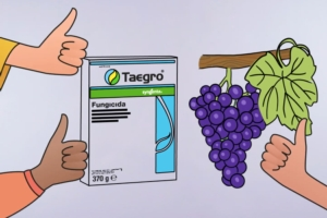 Taegro: registrato in biologico, ideale nell'integrato