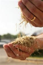 tennessee-biofuels-initiative-utbioenergy