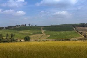 tenuta-trerose-giu-2019-fonte-enovitis-in-campo